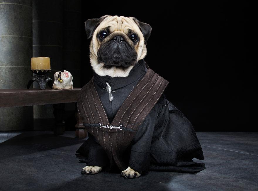 1403765445307_cute-pugs-game-of-thrones-pugs-of-westeros-7