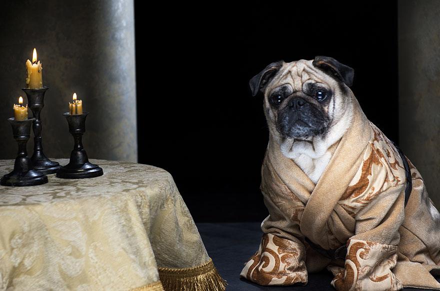 1403765445572_cute-pugs-game-of-thrones-pugs-of-westeros-8