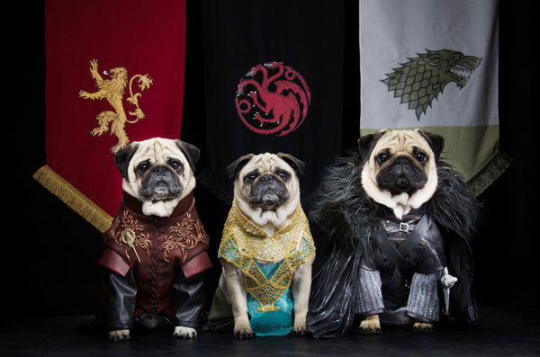 1403765445793_cute-pugs-game-of-thrones-pugs-of-westeros-9