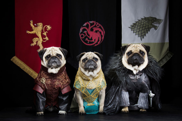 The Pugs of Westeros: Three Pooches Play the Game of Bones