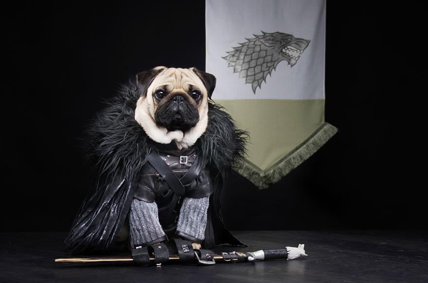 1403765446309_cute-pugs-game-of-thrones-pugs-of-westeros-2