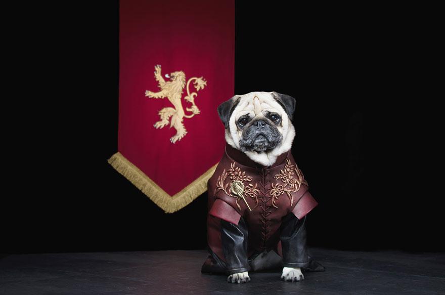 1403765446458_cute-pugs-game-of-thrones-pugs-of-westeros-3