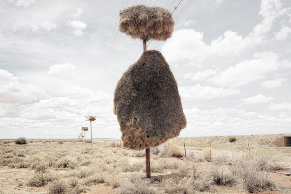 Bizarre Creatures: Social Weavers