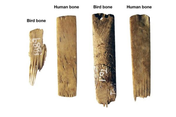 Ancient Tattooing in Polynesia: World's oldest toolkit found in Tonga